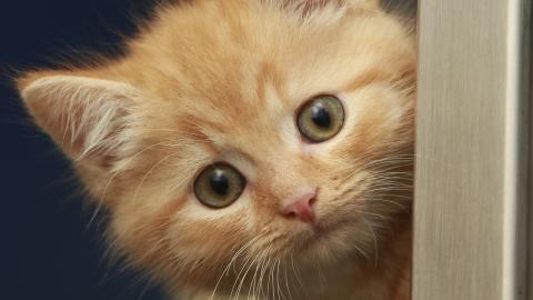 Kitten Marms at the Southampton adoption centre